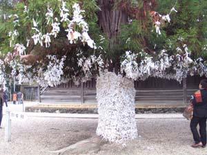 おみくじの木
