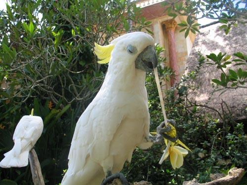 スペイン人の美術館の鳥